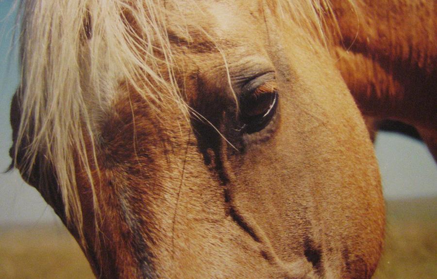 horseclose